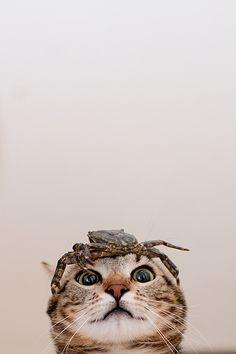 Oh, my !!!Poor cat
