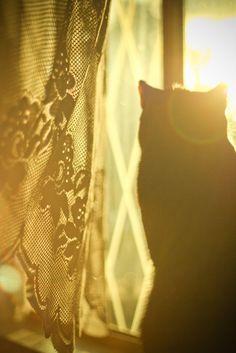 Cat bathed in golden light