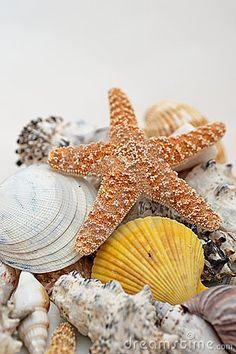 star fish shells