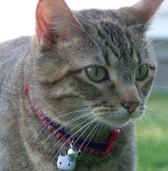 My cat Yodi. Shannon, Galesburg, Illinois. 10/30/12.