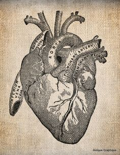 Antique Heart Anatomy Illustration Digital Download for Papercrafts, Transfer, Pillows, etc Burlap No 1505 via Etsy
