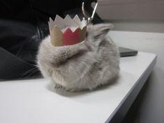 king of the mini buns