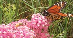 Plants to attract butterflies.