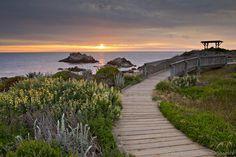 Asilomar State Beach  #roadtrip #bryllupsrejse #bryllupsfeber  http://www.bryllupsfeber.dk/billig-bryllupsrejse/billig-bryllupsrejse-til-usa/