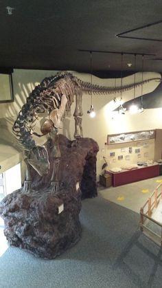 Squelette monté de Camarasaurus