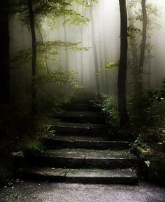 Forest Steps into the Fog. Nature Photography.