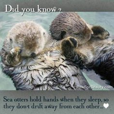Did you know? <3