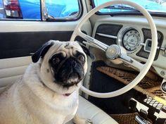 VW Pug