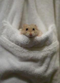A Happy Pocket Hamster