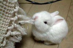 oh bunny bunny bunny....