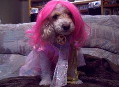 Effie Trinket dog costume!