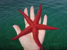 Sicily...starfish that gives off the scent of the sea..
