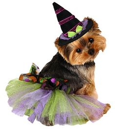 Give your pup a wickedly sweet costume by dressing her in this glittering tutu.