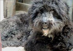 BONO, né en 2006. Pourquoi est ce qu'un petit chien sympathique comme moi se retrouve dans un refuge ? Je suis affectueux, sociable avec les autres chiens, je suis joyeux et intelligent. J'ai du mal à comprendre l'humain parfois, mais je l'aime tout de même ! Sa compagnie me manque ici et mon petit confort aussi. Refuge :  Centre de Défense des Animaux : Refuge de Cabriès(Bouches-du-Rhône)