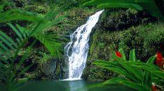 Waimea falls at the Waimea falls park on Oahu.