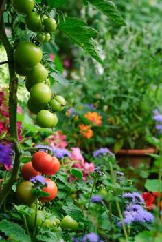 I love companion planting of flowers mixed in with vegetable gardens; some flowers actually repel insects from your veggies and herbs :  // Great Gardens & Ideas //