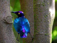 what a beautiful blue bird..