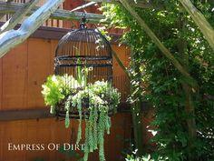 Bird cage succulent planter and more succulent garden ideas #gardenart #succulents #spon #repurposed
