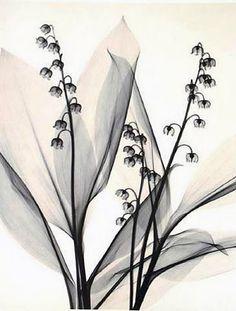 tattoo idea, xray flower, x-ray flower tattoo, flower art, inspir, flowers, flower xray, lilly of the valley tattoo, xray art