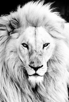 ❥ King of the jungle <3