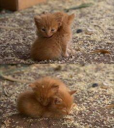 eeeeee! soooo cute!