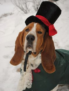 Though the cape and jabot aren't included in this costume, your pooch will still look regal in this elegant top hat.