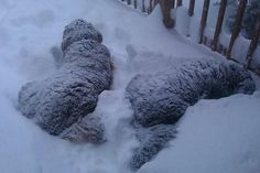 Winslow & Newsome really love the snow. They may have been polar bears in a previous life.