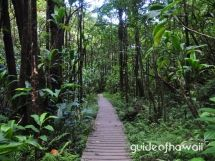 The Pipiwai Trail, above the Oheo Gulch (Seven Sacred Pools), is one of the best hikes on Maui. Pipiwai Trail is 4 miles roundtrip, gaining 650-feet in elevation. It takes 2 1/2 - 5 hours to hike, depending on how much nature loving you do.