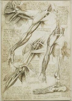 Da Vinci anatomical studies..one of the most amazing artists of human anatomy