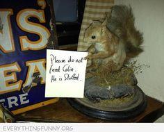 feed colin, funni stuff, lolz, laugh, squirrels, giggl, hilari, nuts, funni meme