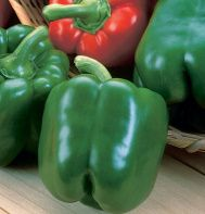 King Arthur Bell Pepper: Plants are large and early to bear big crops of large, thick walled fruits. Days to Maturity:  59 green, 79 red ripe