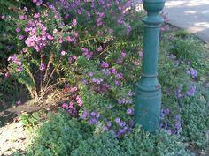 purple & green~Wien, Austria~House of History, LLC.