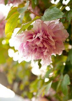 <3 Beautiful spring