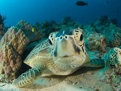 This sea turtle is so cute!
