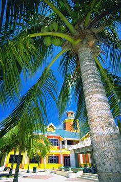 Sunshine and palm trees. Nassau, Bahamas. #caribbean