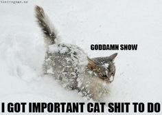 hahaha - this will be Elton after his first snow now that he is an outside kitty!