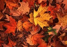 tree fall-leaves