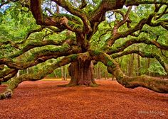 Angel Oak, SC