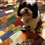 Meet Sam! quilt design, floor, quilt stuff