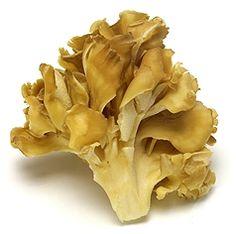 herb, maitak mushroom