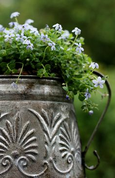 planted pewter pot