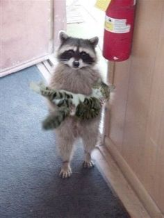 I brought your kitty back!    this is for you Karen