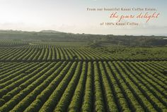 From our beautiful Kauai Coffee Estate, the pure delight of 100% Kauai Coffee!