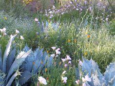 Desert Botanical Garden-Harriet K. Maxwell Wildflower Trail