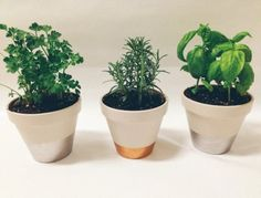 metallic dipped herb pots.