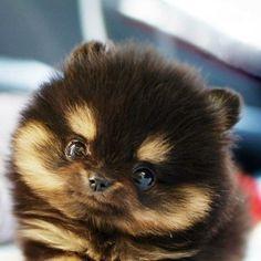 Freaking Cute!!