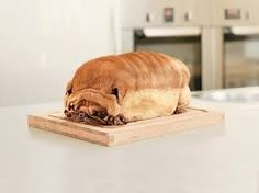 Is this a Dog or a loaf of Bread?