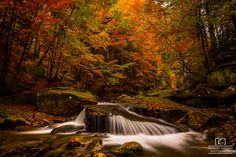 colors of autumn by Mateusz Kiziorek on 500px