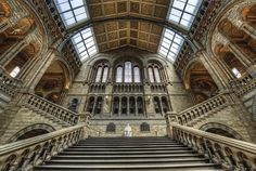 London's Museum of Natural History #JetsetterCurator