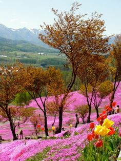 landscap, japan, beauti place, hokkaido, japón, natur, travel, garden, flower